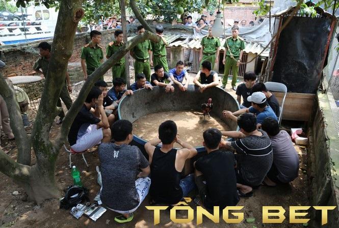 Tiếp tục đột kích các sới đá gà ăn tiền thật tại Bắc Giang